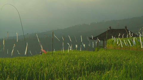 Rice terrace Stock Video Footage