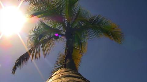 Palm Tree 01 Stock Video Footage