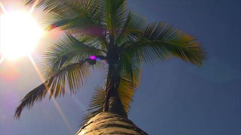 Palm Tree 01 Stock Video Footage