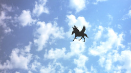 FLIGHT OF PEGASUS (1) Stock Video Footage