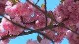 flowering tree b Footage