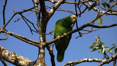 Parrot 03 Stock Video Footage
