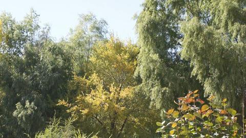 Heihe University Autumn Views