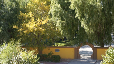 Heihe University. Autumn trees 02 Stock Video Footage