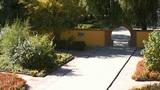 Heihe University. Autumn trees 02 Footage