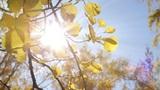 Close-up of Tree Leaves Footage