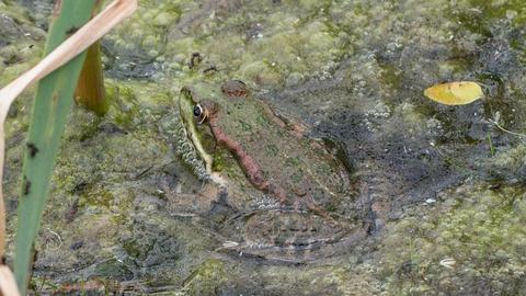 Frog Filmmaterial