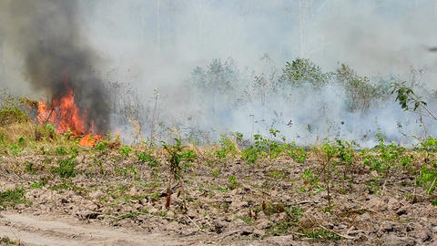 Fire near the forest near the agricultural farm Footage