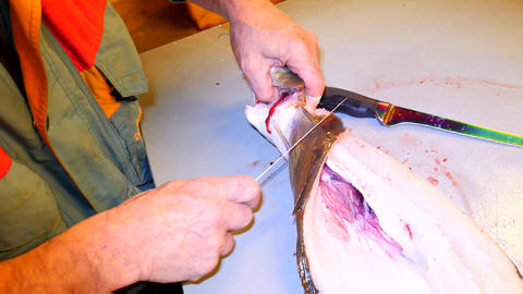 Hands cut fresh cod fish, remove and check livers. Hands control viscera and sep 画像
