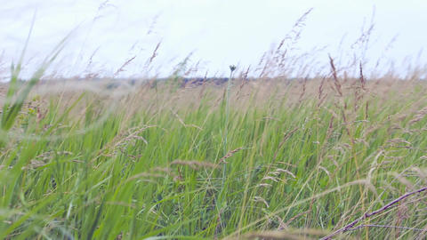 Prairie grass in the wind Footage