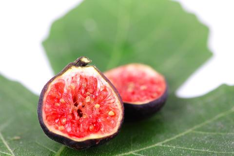 Fresh figs フォト