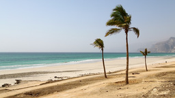 Palm In The Wind And Ocean Sea Arab 6 stock footage