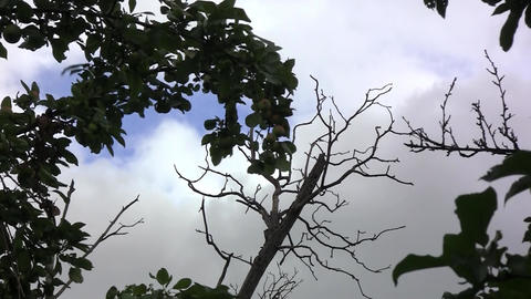 Dark sky was filled with dark clouds, the wind blows hard. Dry bare branches wit Live Action