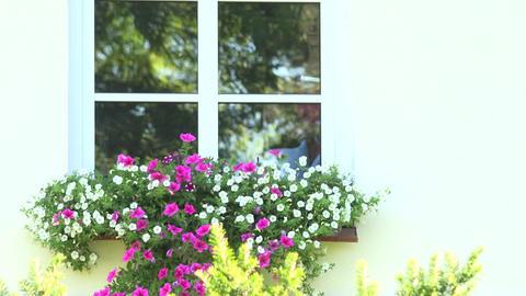 House keeper girl open window and water flower pots on window sill Footage
