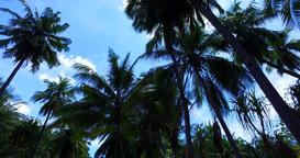 v07996 Maldives beautiful white sandy beach background with palm trees on sunny Footage