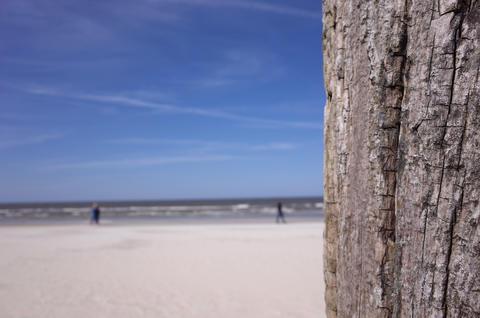 Beach wood background フォト
