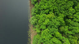 Aerial: straight flight, above view of line between forest and river Footage