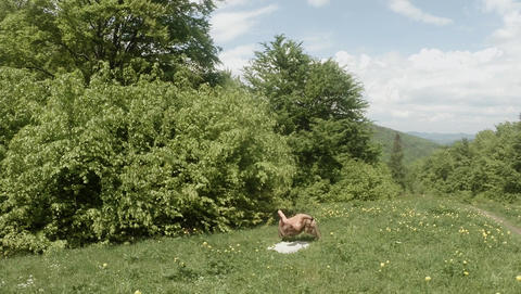 Time laps yogi doing physical exercise in yellow flowers in the forest on green  Footage