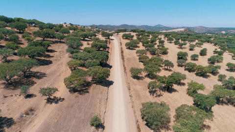 Aerial View Dirt Road in Rural Landscape Live Action