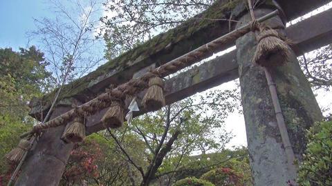 Shrine gate in Japan ビデオ