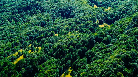 Aerial Drone Fly Over Carpathian Mountains Forest In Transylvania Footage