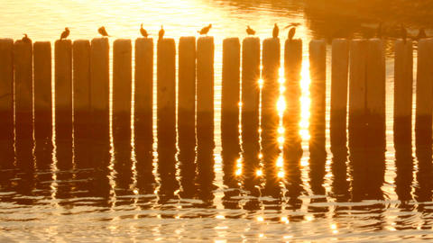 Birds in the port at sunset Footage