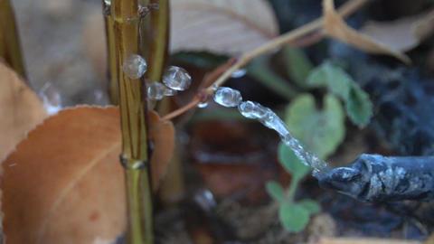 Drip Irrigation Footage