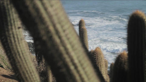 Crashing waves and cactus Live Action