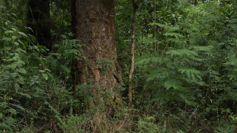 Forest rain Footage