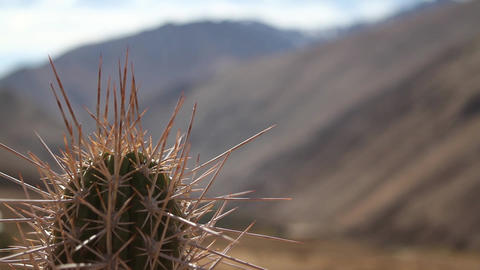 Cactus and mountains Footage