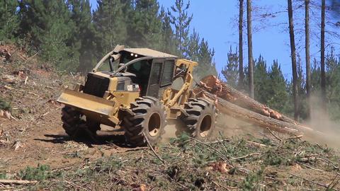 Deforesting machine Footage