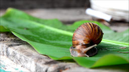 Snail fast moving on green nature ビデオ