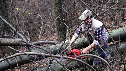 Man operates a chainsaw which cut the branches of a tree in the forest 12 Footage