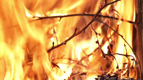 Dry branches of trees burning high heat with red flames Fire is seen almost 35 Footage