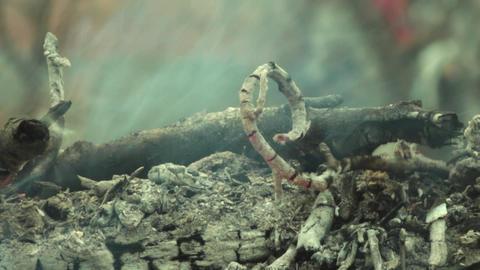 Smoke dry twigs burning fire burning Coals of wood burned 31 Footage