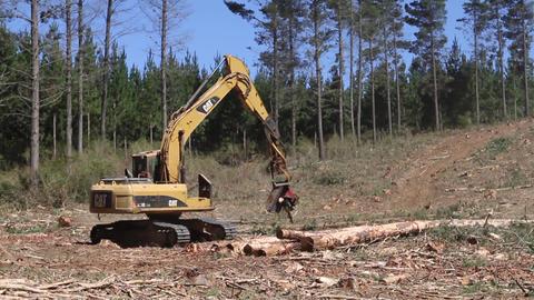 Machine handling forest wood Footage