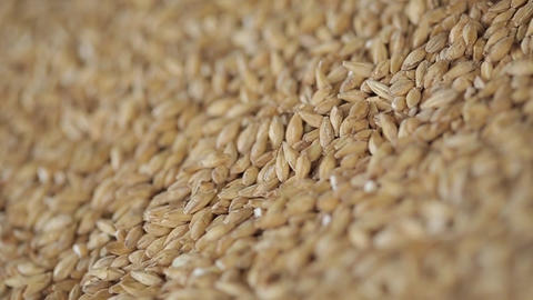 Corn kernels detail Footage