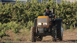 Tractor seeding grain Footage
