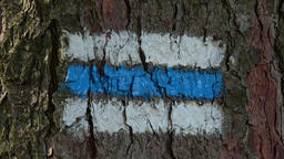Tourist sign on the tree bark. Colorful tourist sign or mark on tree for hiking  Image