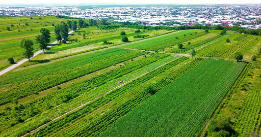 Aerial Drone View Of Green Agricultural Cultivated Fields Live Action