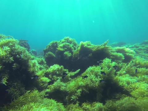 Swimming underwater Footage