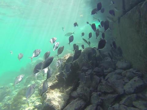 Scuba diving Live Action