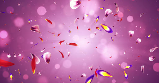 Flying Romantic Red Pink Purple Sakura Flower Petals Falling Background Loop 4k Animation