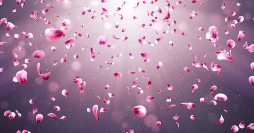 Flying Romantic Red Pink Rose Sakura Flower Petals Falling Background Loop 4k Animation