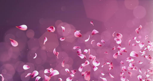 Flying Romantic Red Pink Rose Sakura Flower Petals Falling Placeholder Loop 4k Animation