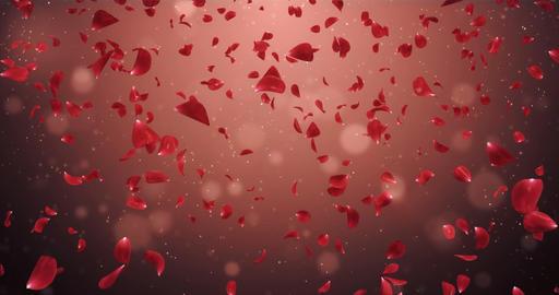 Flying Romantic Dark Red Rose Flower Petals Falling Background Loop 4k Animation