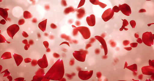 Whirl Flying Romantic Light Red Rose Flower Petals Background Loop 4k Animation