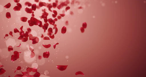 Flying Blurry Romantic Red Rose Flower Petals Falling Placeholder Loop 4k Animation