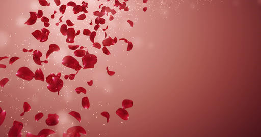 Flying Romantic Red Rose Flower Petals Falling Placeholder Loop 4k Animation