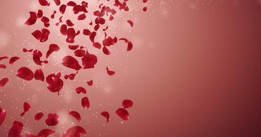 Flying Romantic Red Rose Flower Petals Falling Placeholder Loop 4k Animation